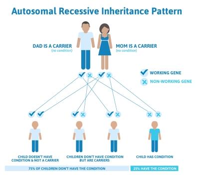 autosomal_recessive_inheritance_pattern
